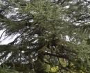 Árboles de la finca